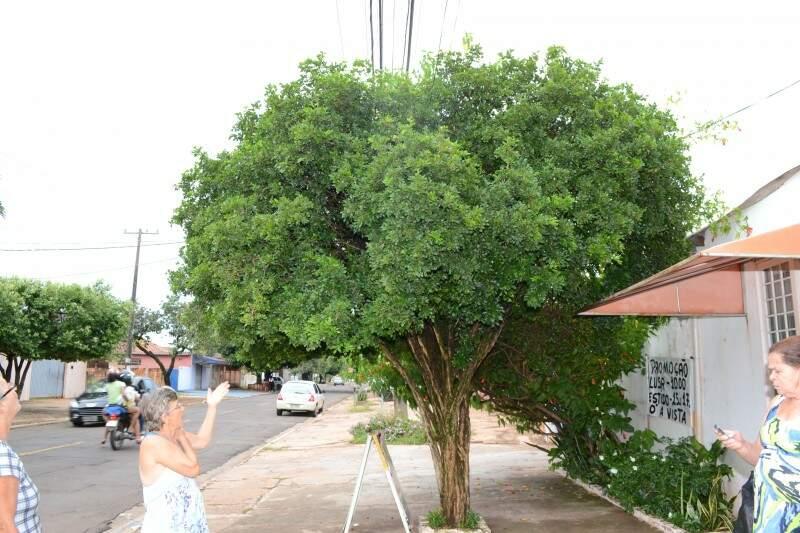 Dona Cleuza tem orgulho de mostrar a árvore 'Dama da Noite' que em 19 anos nunca precisou ser podada.