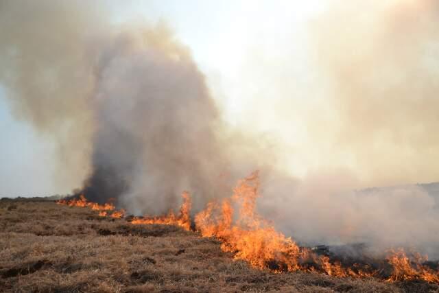 Incêndio que aconteceu na propriedade vizinha ontem (4) (Foto: Simão Nogueira)