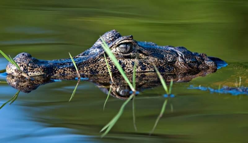Pantanal tem registradas 4.700 espécies, mas os pesquisadores sabem que isso não é tudo (Foto: Adriano Gambarini/WWF-Brasil)