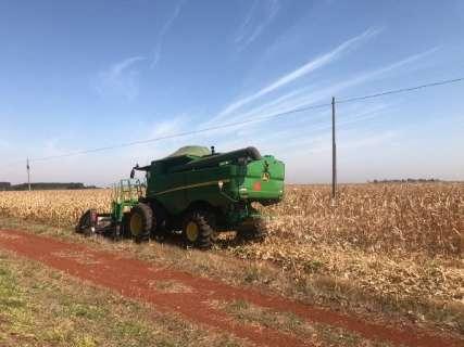 Colheita do milho atinge 99,2% da área plantada em Mato Grosso do Sul