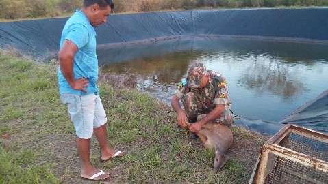 Em 1 ano, PMA captura 1,7 mil animais silvestres em área urbana do estado
