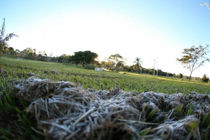 Geada cobre vegetação em parque de Dourados pelo segundo dia consecutivo (Foto: A. Frota)