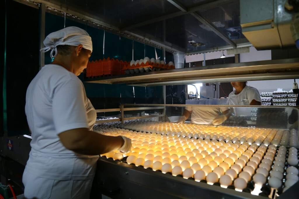Na ovoscopia, luzes possibilitam que os ovos sejam examinados internamente (Foto: Marcos Ermínio)