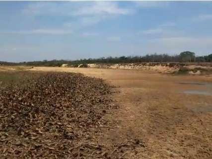 """Búfalo """"atolado"""" em rio do Pantanal chama atenção para seca na região"""