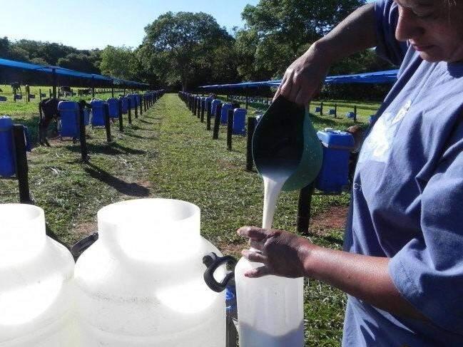 Produtora de leite durante manejo em propriedade rural do estado. Categoria está apreensiva. (Foto: Divulgação/ Conseleite)