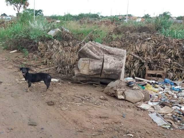 Cachorro abandonado junto com os entulhos (Foto: Direto das ruas)