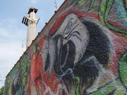A migrante de penas coloridas que alegrou a 'Capital das Araras'