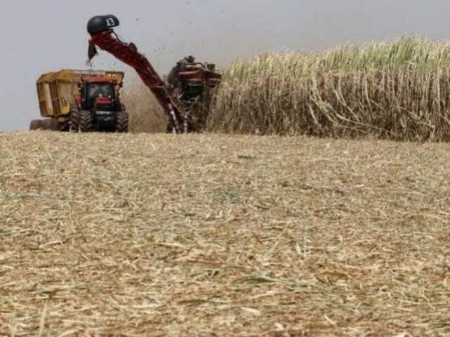 Colheita de cana-de-açúcar em MS (Foto: divulgação)