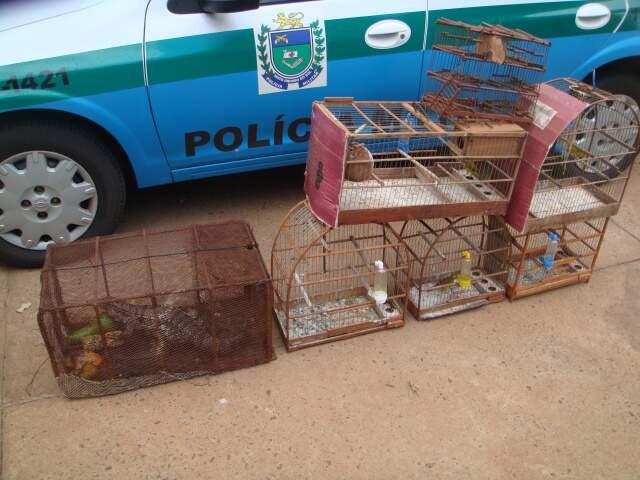 Não houve provas com relação às armadilhas encontradas na região, mas na casa do acusado tinha 5 aves silvestres, sendo 4 canários da terra e 1 coleira-do-brejo em gaiolas sem autorização ambiental (Foto: PMA)