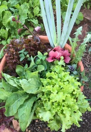 Cebolinha, alface e outras culturas plantadas em um vaso (Foto: Arquivo pessoal)