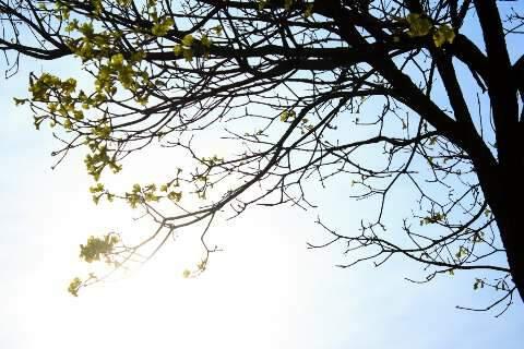 Domingo terá sol forte, calor de 39ºC e chance de chuva isolada