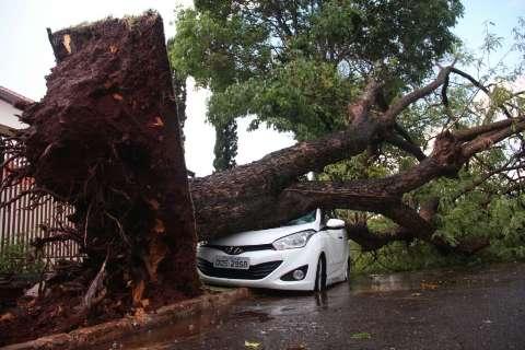 Mesmo rápida, temporal causa destruição em vários pontos da Capital