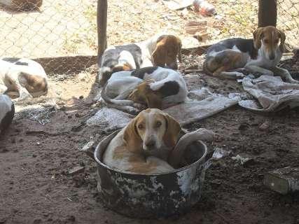 Amarrados, sujos e sem comida, cães são recolhidos de canil na MS-040