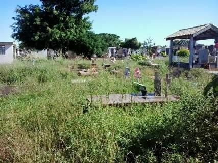 Leitores ainda se queixam do mato alto no cemitério Santo Amaro