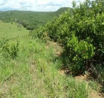 Projeto recupera microbacias do Taquari, apesar de não acabar com degradação