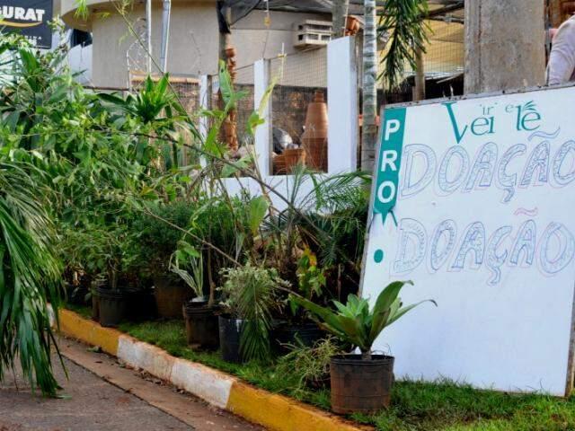 Loja oferece plantas de graça. (Foto: Alcides Neto)