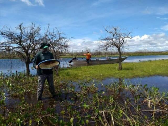 Material coletado por pesquisadores da UFPR será preparado para depósito em coleções biológicas, o que ajudará na preservação do patrimônio genético do Brasil. (Foto: Divulgação)