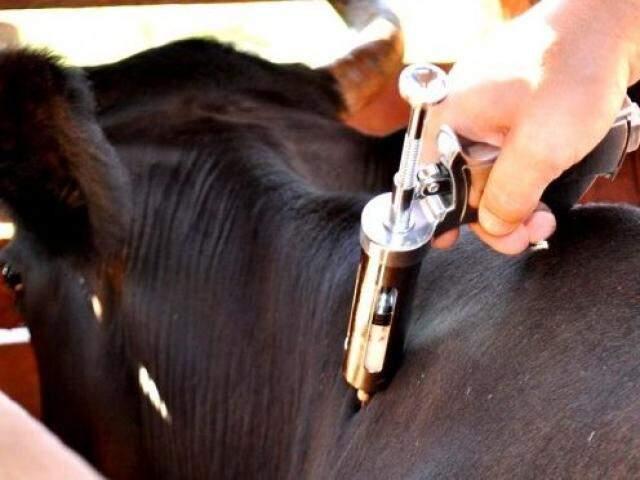 O registro de vacinação para a região Pantanal deve ser feito até dia 30 de junho.(Foto: Divulgação/ Semagro)