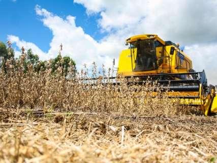 Em safra recorde, colheita já atinge 93% da área plantada com soja em MS