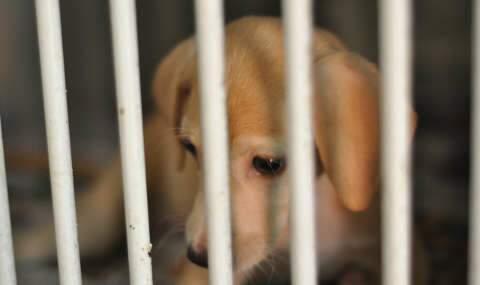 O caso da cadela Mel, apenas um entre muitos maus-tratos a bichos