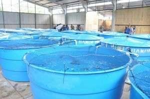 Falta de conhecimento pode ser causa da morte de 10 mil peixes do Aquário