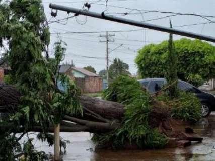 Em 45 minutos, temporal derruba 15 árvores em Campo Grande