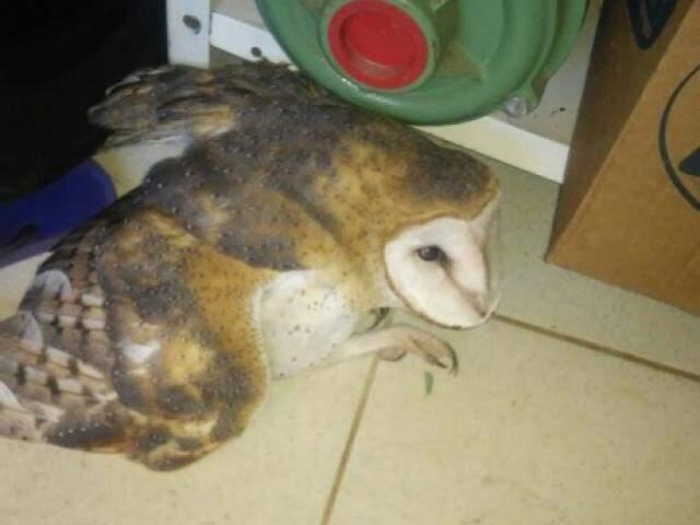 Coruja foi colocada em local onde não fosse perturbada (Foto: Direto das Ruas)