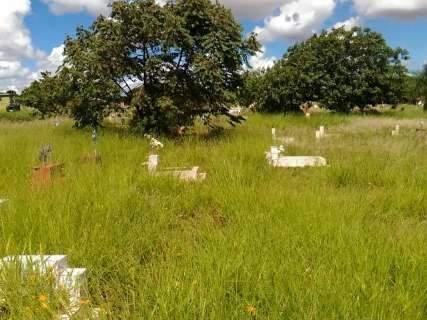 Mato alto no cemitério Santo Amaro revolta familiares durante velório