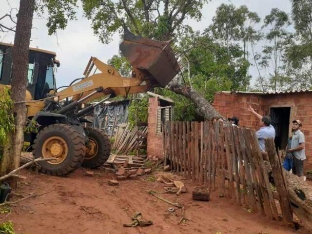Árvore de grande porte caiu sobre casa e destruição parte do imóvel  (Foto: assessoria de imprensa)