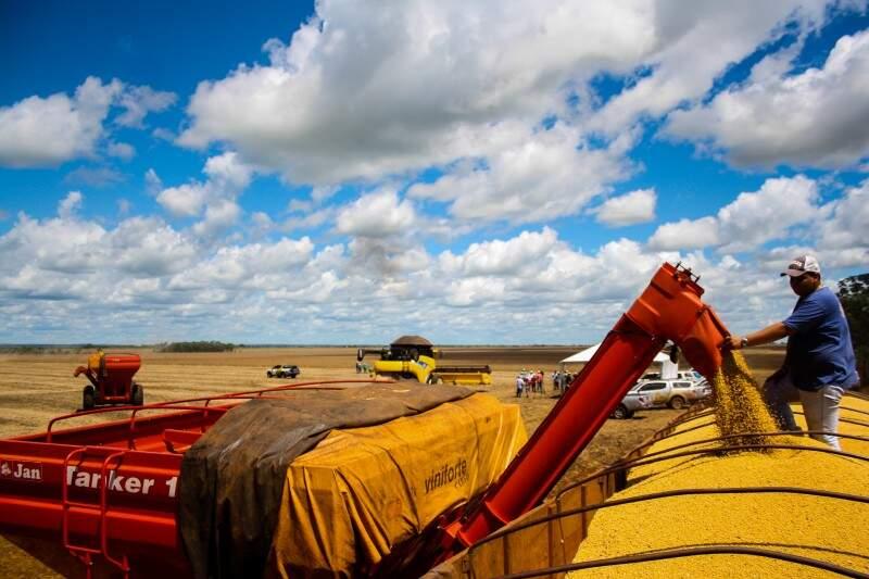PIB de produção de soja deve ser o mais alto da história do setor em 2015 (Foto: Marcos Ermínio)