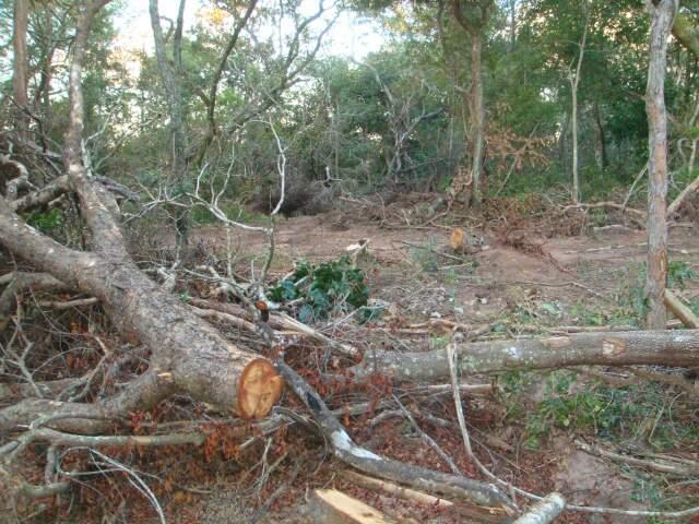 Por meio de denúncias, PMA autua fazendeiro por desmatamento de 27,5 hectares. (Foto: divulgação)