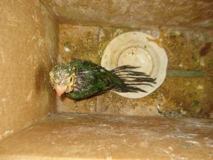 Ibama apreende pássaros e pele de jaguatirica em operação