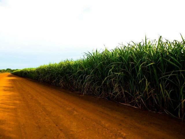 Safra da cana-de-açúcar atingiu 18,5 milhões de toneladas no primeiro trimestre (Foto: Divulgação)