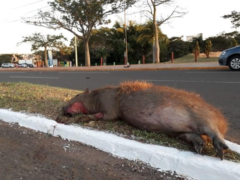 Corpo no canteiro, em frente ao parque (Foto: Vinícius Santana)