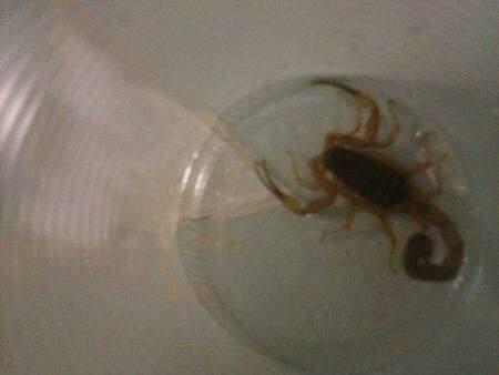 Depois de capturado o animal foi colocado dentro de um copo plástico.(Foto:Direto das Ruas)