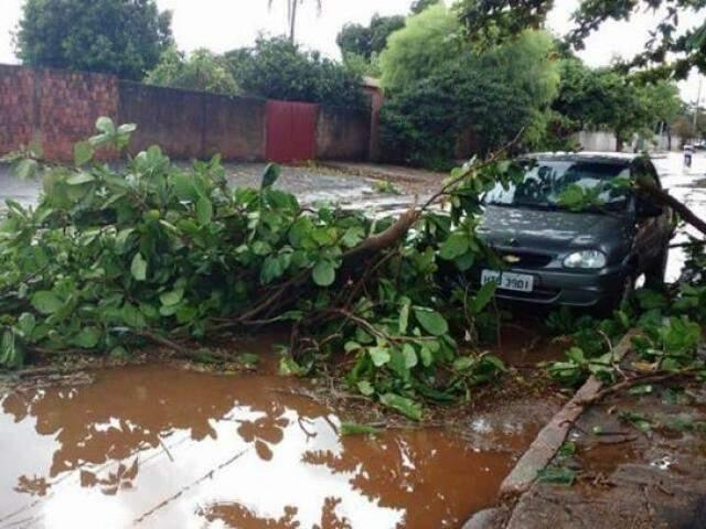 Árvore caída em cima de veículo na Vila Margarida em Maracaju (Foto: Direto das Ruas/ Tudo de MS)