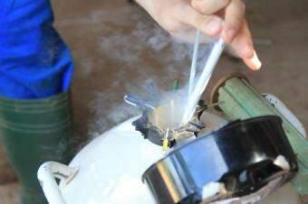 O sêmen coletado é armazenado em botijões de nitrogênio líquido. (Foto: Marina Pacheco)