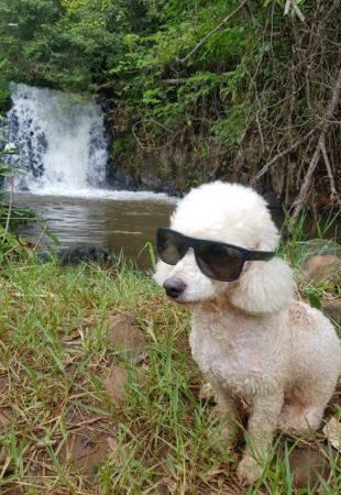 Juca é estiloso e usa óculos durante as aventuras (Foto: Arquivo pessoal)