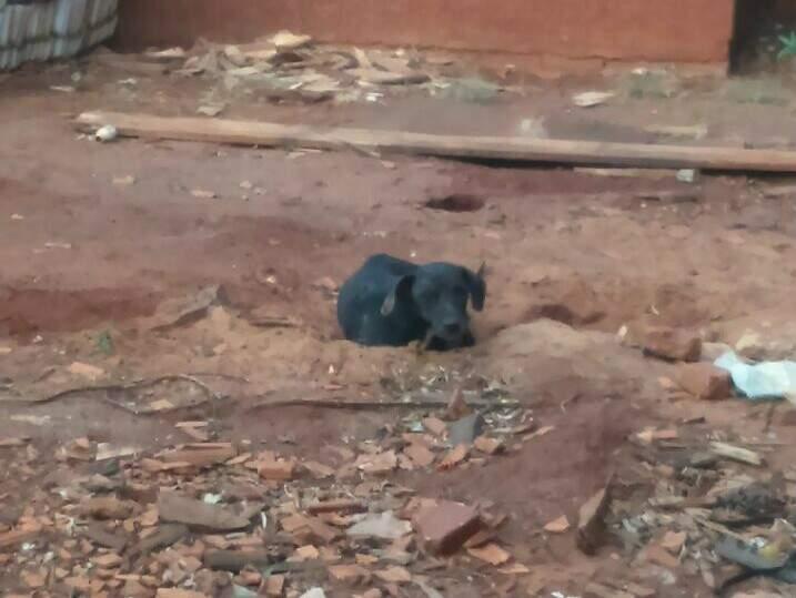Cãozinho abandonado e com fome. (Foto: Direto das Ruas)