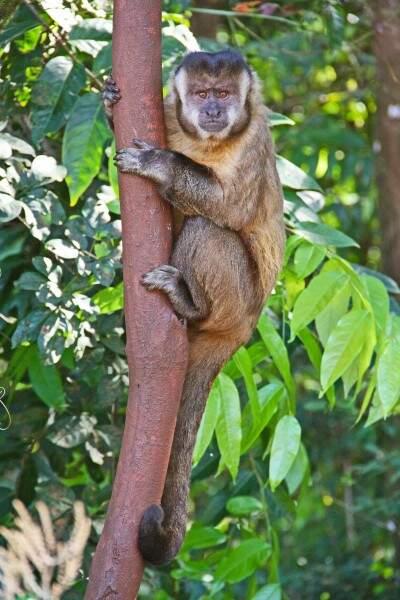 Macacos-pregos e saguis, fazem a alegria de quem passa na Rua Vitor Meireles. (Foto: Marcos Ermínio)