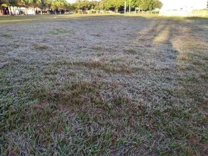 Com madrugada mais fria do ano, geada castiga produção no sul de MS