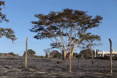Tempo seco, calor e fogo no mato: equação que torna os dias difíceis
