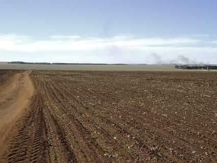 Falta de chuva faz plantio de soja ter o maior atraso em seis anos