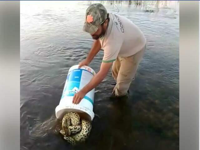 Rodrigo devolvendo o animal à natureza.