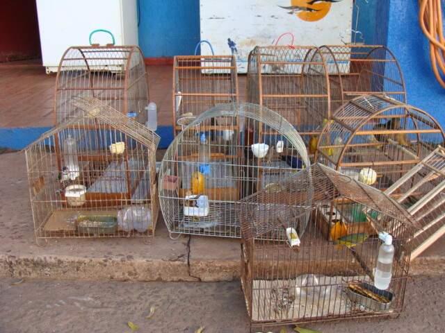 Aves estavam em casa no bairro Mário Covas. (Foto: PMA)