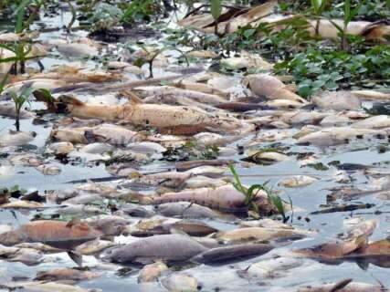 MPE abre inquérito para investigar morte de peixes em Aquidauana