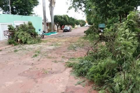 Chuva de 41 milímetros derrubou árvores e também a temperatura