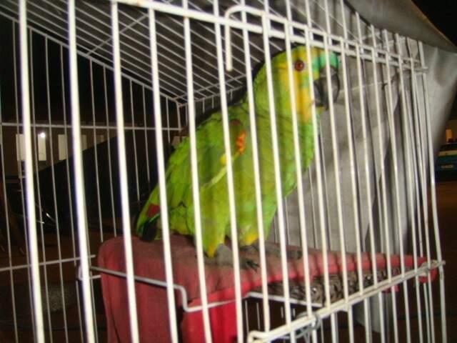Papagaio foi levado ao Cras. (Foto:Divulgação)