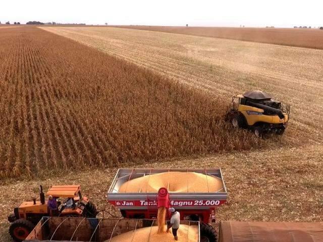 Segunda safra de milho foi castigada pela falta de chuva e quebra chegou a 25% (Foto: Eliel Oliveira)