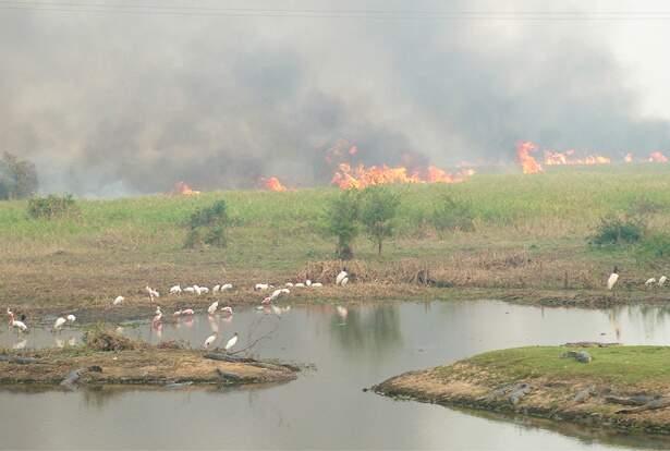 Incêndios florestais no Pantanal colocam Corumbá como a capital de queimadas no País. (Foto: Sandra Santos/Embrapa Pantanal)